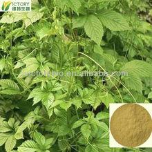 Great quality gynostemma extract powder