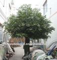 Árvore artificial / tronco de árvore artificial decoração / enorme cycas rei