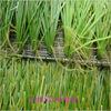 Professional football artificial grass underlay from Jiangsen