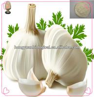 pure natural garlic extract allicin powder