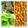 kiwi fruit import from china