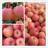 2013 fresh fuji apple bulk fruits in your request