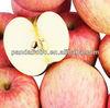 supplying bulk crispy fresh red fuji and qinguan apple on hot sale