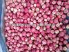 2013 china gala apple bulk fruits good quality