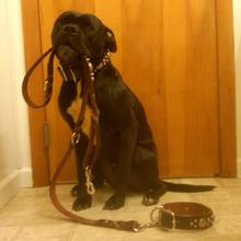 Customized nylon burberry dog collars leashes