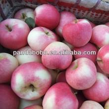 Fresh Gala Apple/Fuji/Huaniu/Qinguan/red star/golden delicious 80/88/100/113/125/138/150/163