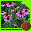 Hot Sales of High Quality Echinacea Purpurea extract by Shaanxi LLT Industries