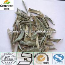 olive leaf extract powder,Oleuropein&Hydroxytyrosol