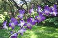 florescortadas