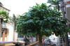 Green Banyan Tree ,artificial banyan tree/cheap artificial trees/artificial plastic tree