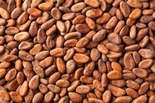 High Grade Sun Dried Raw Cocoa Beans for Sale