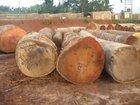 Cheap Tali, Okan and Okoume hard Wood