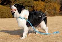 appealing Kung Fu Dog brand pet dog collar with leash pet lead dog leash
