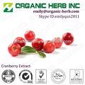 Orgnic hierba inc. Suministro- extracto de arándano/extracto de arándano en polvo/jugo de arándano extracto, producto caliente