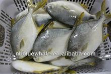 fresh frozen golden pomfret white pomfret fish