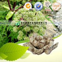 Top grade Tonic Factory price Chinese angelica or Angelica sinensis