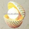 fonte artificial de resina da decoração do escudo do mar