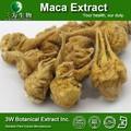 Halal y Kosher Maca extracto 20:1 Maca extracto de raíz de polvo Maca extracto Macamides y Macaenes