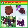 High quality grape seed p.e for beauty