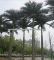 Artificial big coqueiro, artificial decorativa da árvore de coco, altaimitação da árvore de coco fabricados na china