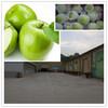 good quality custard apple fruit fresh green apple for sale