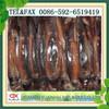 New 100-150g illex squid for tuna bait