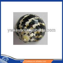 BackKingKongTurban conch ,decorative seashell,conch shells wholesale