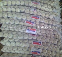fresh braid garlic