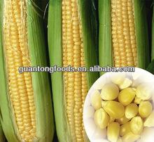 conservas de maíz dulce en conserva vegetal