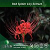Red spider lily Botanical Extract (98% Galanthamine) for health care
