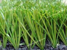 dark green fibrillated grass for soccer ball field