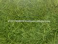 Hortalizassecas( perejil, estragón, de eneldo, puerro, menta verde, menta y un largo etc)