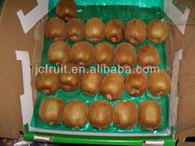 Fresh kivi fruit for export