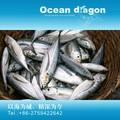 Peixe congelado carapau fish/18 cm+
