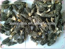 dried morels mushroom with HACCP,FDA ORGANIC