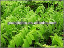 high quaility sale of Polygonatum P.E.