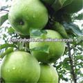 المزيد من الفوائد الغذائية من الفاكهة الطازجة الجدة سميث التفاح الأخضر كما التلوث-- مجانا