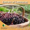 100% Natural Extract of Sambucus / Sambucus dry Extract / Sambucus fruit Powder