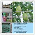 nome científico de frutas chamado de maçã verde fresca e granny smith no preço de atacado