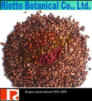 High Quality Grape Seed Extract with 60% Polyphenols