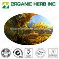 extracto de algas en polvo