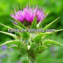 100% Natural hepatic protector silymarin soluble in water 80% Silymarin UV,