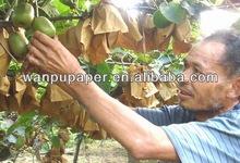 fruit kiwi fruit growing bag