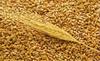 barley, crop 2014