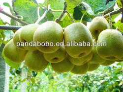 2013 new season fresh organic red heart kiwi fruit chinese goosebeery