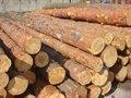 spruce grumes à vendre à un prix modéré
