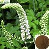 100% nature black cohosh extract powder /black cohosh extract triterpenes glycosides