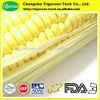 100% natural Cornsilk Extract/Cornsilk Extract powder/Zea mays