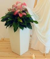 white square vase, white plastic flower pots, square planter pots