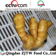 good price of fresh ginger and garlic in China